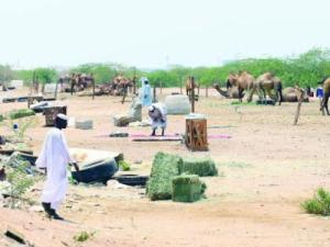 Camel pens