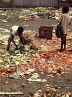 bidonvilles Brésil